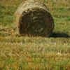 Страховая пустота: Аграрный страховой пул не стал заметным игроком рынка